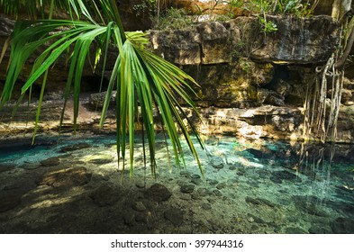 Amazing view to cenote with transparent turquoise water and palm leaves in front