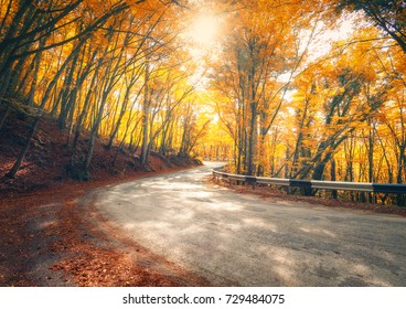 Amazing view with colorful autumn forest with asphalt mountain road at sunset. Beautiful landscape with empty road, trees and sunlight in the evening in autumn. Travel background. Nature