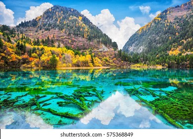 Amazing view of crystal clear water of the Five Flower Lake (Multicolored Lake) among autumn woods in  Jiuzhaigou nature (Jiuzhai Valley National Park), China.