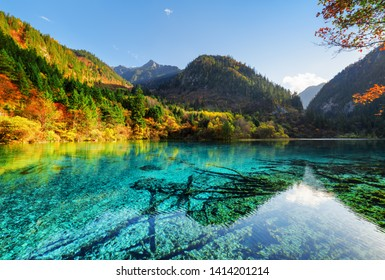 Amazing view of the Five Flower Lake (Multicolored Lake) among wooded mountains, Jiuzhaigou nature reserve, China. Colorful autumn forest reflected in azure water. Submerged tree trunks at the bottom.