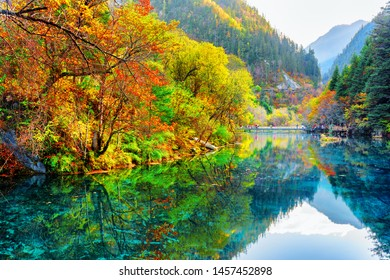 Amazing view of the Five Flower Lake (Multicolored Lake) among colorful fall woods and mountains in Jiuzhaigou nature reserve (Jiuzhai Valley National Park), China. Autumn forest reflected in water.
