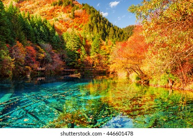 Amazing view of the Five Flower Lake (Multicolored Lake) among colorful fall woods in Jiuzhaigou nature reserve, China. Autumn forest reflected in azure water. Submerged tree trunks at the bottom.