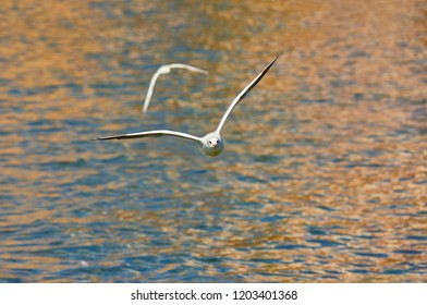 Amazing view of gulls flying over Ohrid lake in Macedonia. Animal concept.