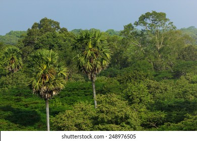 Amazing view of Jungle in Southeast Asia