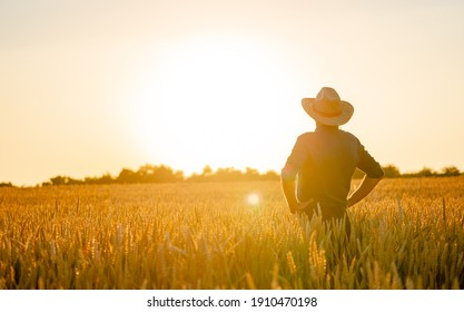 Amazing view with man standing back to the camera . Farmer checks natural organic harvest in the sunset light.