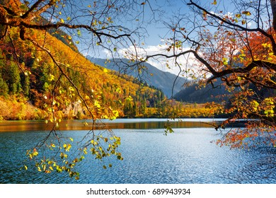Amazing view of the Panda Lake among colorful fall woods and mountains at the Rize Valley, Jiuzhaigou nature reserve (Jiuzhai Valley National Park), China. Sunny landscape. View through autumn foliage