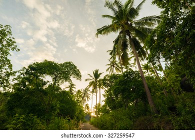 Amazing view of sky with coconut palm trees in morning sunrise