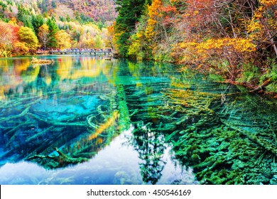 Amazing view of submerged tree trunks in azure crystal clear water of the Five Flower Lake (Multicolored Lake) among autumn woods in Jiuzhaigou nature reserve (Jiuzhai Valley National Park), China.