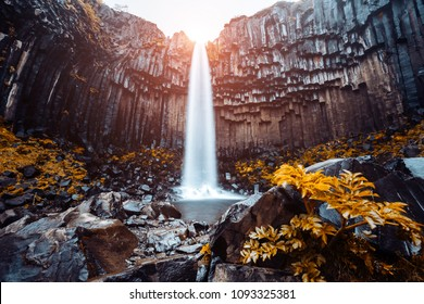 Amazing view of Svartifoss waterfall. Location Skaftafell National Park, Vatnajokull glacier, Iceland, Europe. Scenic image of tourist attraction. Travel destination. Discover the beauty of earth.
