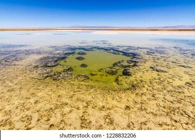 Amazing views of the salt lakes and salt flats inside Atacama Desert at San Pedro de Atacama in Chile altiplano inside the Andes. An infinity desert horizon on the driest desert in the world: Atacama