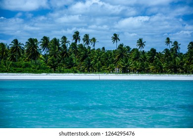 Amazing views of Sao Miguel do Milagres beach with coconut trees at Alagoas state, brazilian northeast.