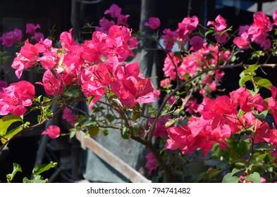 Amazing vivid colored flowers