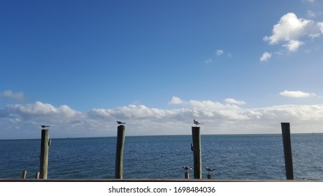 Amazing waterview with birds on Piers in Florida