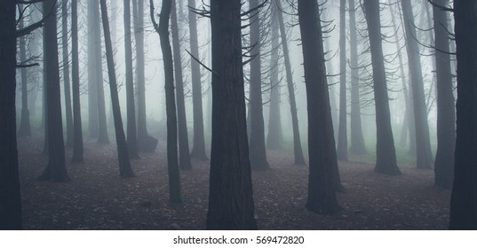 Amazing winter day in a forest covered by mist. Sintra Mountains in Portugal