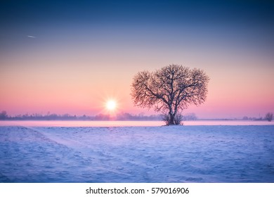 Amazing winter landscape with lonely tree and snow fields at colorful sunset and blue skies.