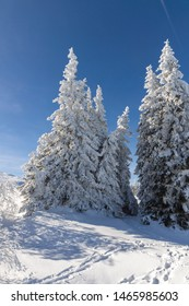 Amazing winter landscape of Vitosha Mountain, Sofia City Region, Bulgaria