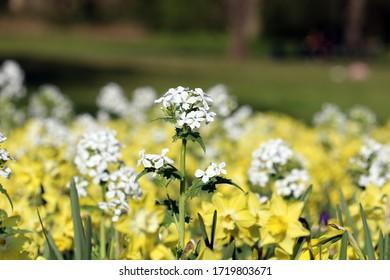 Erstaunliche gelbe dunkle Blume mit floralem Hintergrund