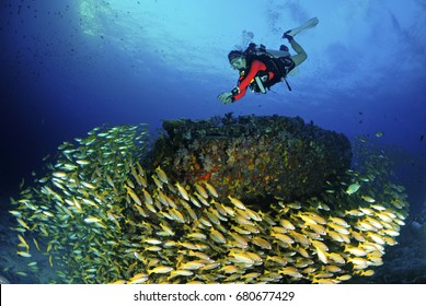 Amazing young scuba diver with fish, reef and beauty underwater.