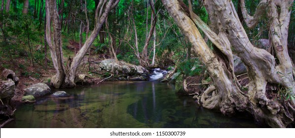An amazingly beautiful creek with a small water cascade flows between beautiful curved trees in the forest. Davies Creek National Park and Clohesy River, Queensland, Australia.