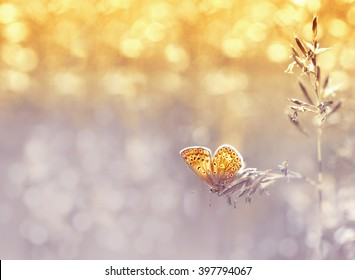 Amazingly beautiful delicate soft butterfly on a beautiful golden background. Soft dreamy tender artistic image butterfly form for postcard or wallpaper for desktop. Macro.