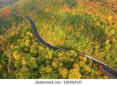 Amazingly beauty of forest in autumn. Macedonian mountains. Autumn concept.