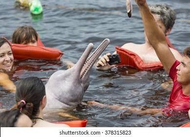 AMAZON, BRAZIL, MANAUS - OCTOBER 17, 2013: People feeding the famous Pink Dolphin (Boto Rosa) in Amazon, Brazil.