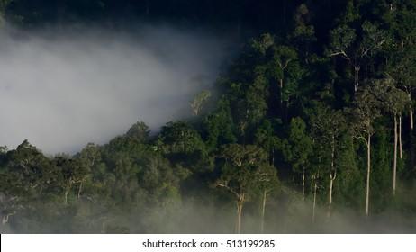 Amazon forest landscape