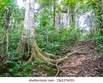 The Amazon forest in the Madidi National Park, in North of Bolivia