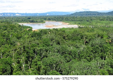 Amazon forest in the Madidi National Park, BoliviaMadidi National Park can be reached from Rurrenabaque if you cross the Beni River with the small passenger ferry.