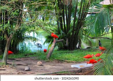 amazon herons in brazil