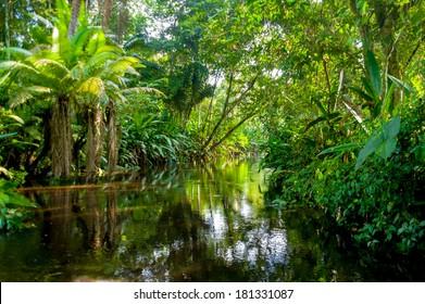 Amazon Jungle  Yasuni, Ecuador
