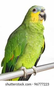 Amazon Parrot on white background.
