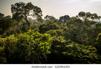 amazon rainforest canopy