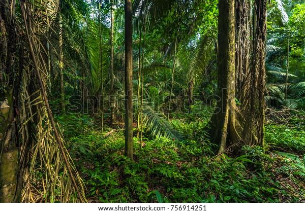 The Amazon rainforest in Manu National Park, Peru