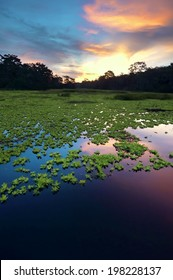 Amazon Rainforest, Peru, South America