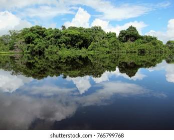 Amazon rainforest reflecting in a lake in Ecuador