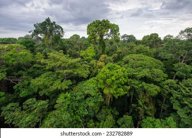 Amazon rainforest in Tambopata reserve, Peru