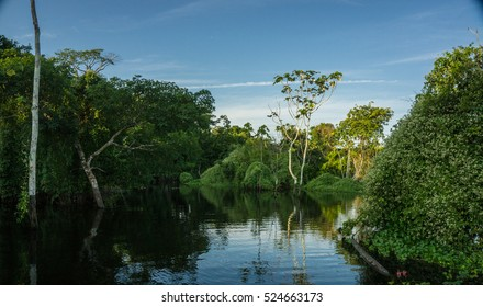 Amazon river and rainforest in Brazil