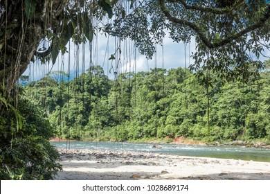 Amazon, View of the tropical rainforest, Rio Napo, Misahualli, Ecuador