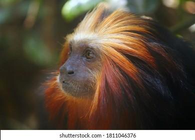 Amazonia/Manaus/Brazil - 07/SET/2020 : Animals symbols of the Brazilian fauna. Brazilian Amazon