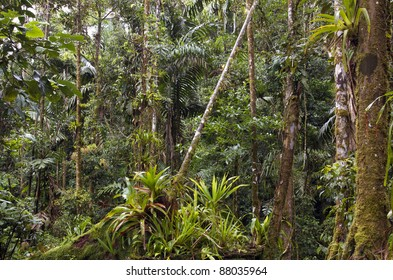 Amazonian rainforest in Ecuador with many bromeliads in foreground