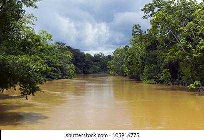 Amazonian river, the water brown with sediment, the rio Tiputini in Ecuador