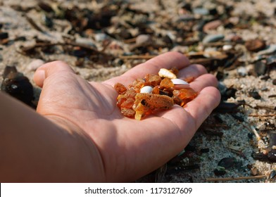 amber on a palm, stones of amber of the Baltic sea