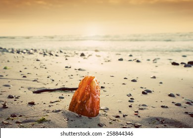 Amber stone on the beach. Precious gem, treasure concept. Baltic Sea, Poland.