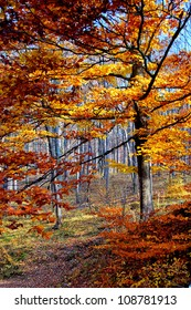Amber Trees in Autumn