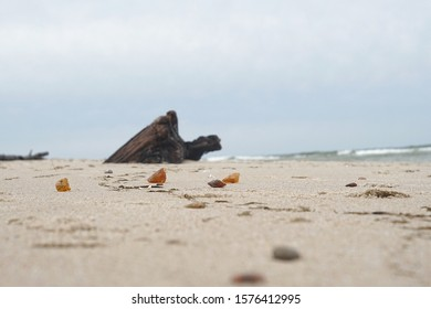 amber washed on the beach of the Baltic Sea, precious stones
