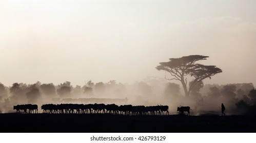 AMBOSELI NATIONAL PARK, KENYA/EAST AFRICA - FEBRUARY 5th 2009 - Masai tribesmen and their cattle at sunset, Amboseli National Park, Kenya. Feb. 5th 2009.