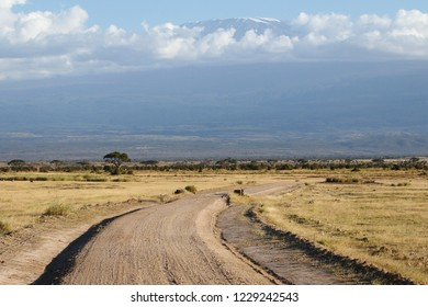 Amboseli road with kilimanjaro background