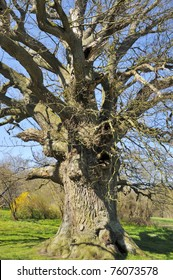The Ambrosius Oak is a 400 year old giant Oak by the North Forest on Taasinge Funen. The Oak is named after the Poet  Ambrosius Stub, who around 1750 lived at the nearby Valdemar Castle.