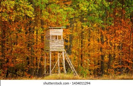 Ambush in the forest in autumn